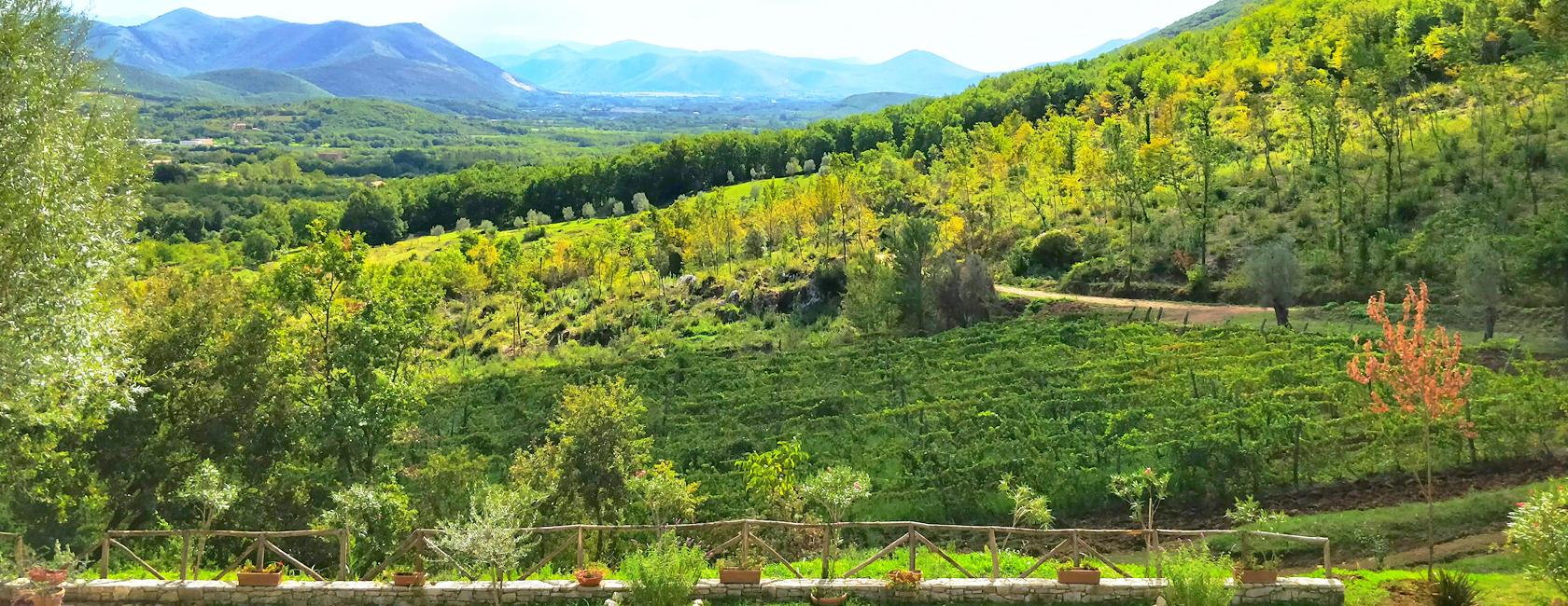 Il Verro Azienda Agricola. Vini di alta qualità. Formicola, Caserta.